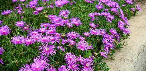 Perennial Plants