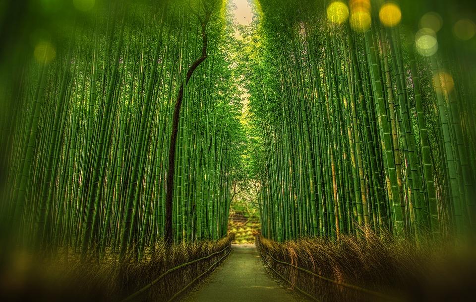 kyoto-bamboo-perennial-garden